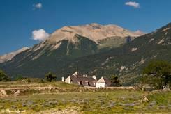 Größeres Vorkommen von Ausdauerndem Lein in den französischen Alpen bei Mont-Dauphin