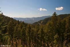 Die Aussicht vom Col de Turini wird leider etwas von Bäumen behindert