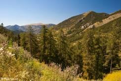 Die Aussicht ist am Col Saint-Martin zum größten Teil durch Bäume beschränkt, hier der Blick Richtung Westen