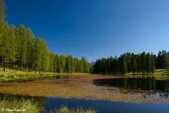 Der Lac de la Roue umgeben von leuchtend grünen Lärchen im Abendlicht
