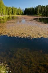 Der Bergsee zeichnet sich sich durch klares Wasser und starken Bewuchs mit Wasserpflanzen aus
